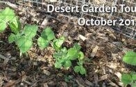Desert Garden Tour: October 2019