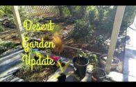 Desert garden (back to Eden style) no water after 1