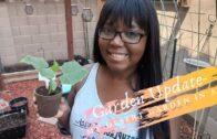 Garden update-grow vegetables in my desert garden in August