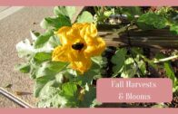 Harvest and bloom in the desert garden area in autumn