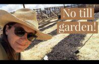How do I make a no-tillage garden and pest control-High