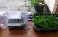 How to take care of cacti and succulent seedlings in