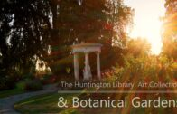 Huntington Library Art Collection and Botanic Garden November 2019. Shoot