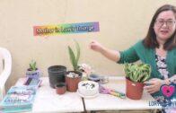 Indoor Plant Series Part 2   Desert Garden Series  