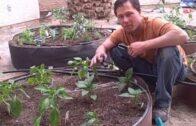 Install raised bed vegetable garden from start to finish