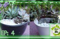 My Succulent Vegetable Garden (EP: 4)