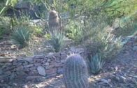 Natural growth of desert shrubs