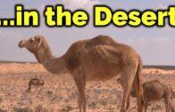 Stunning desert landscape