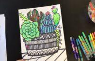 Succulent and cactus pots