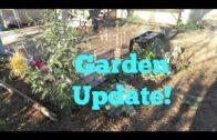 The former desert garden update: amaranth and new morning glory!