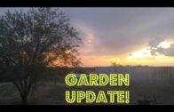 The last trip to the desert backyard garden