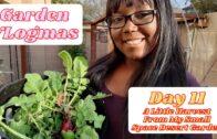 Vlogmas Day 11-Little Harvest of My Little Space Desert Garden
