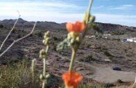 Arizona Desert Garden Hiking Trail ~ Kingman AZ