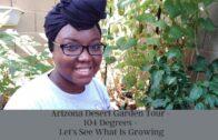 Arizona Desert Garden Tour-104 degrees-let's see what growth is