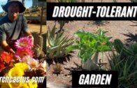 Brent's Desert Garden + Plant Removal (Brent Wiegand, Interview) Part