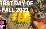 Cacti and succulents renew on the first day of autumn 2021
