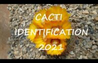 Cactus identification in 2021