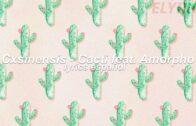 Cxsinensis-a feat of cactus. Amorpho (Lyrics Español)