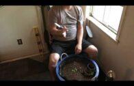 DIY self-absorbent planter, suitable for large roots #indoor #veggiegarden #sanpedro