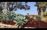 Desert garden / Huntington Botanical Gardens 2/2020