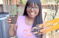 Garden Tour 2020-My Desert Garden on August 30, 2020