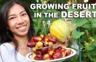Growing fruits in the desert