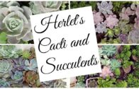 Herlet's cacti and succulents