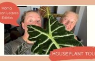 Houseplant Journey | Mama Clean Leaves Edition | Before and