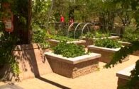 Las Vegas Summer Vegetable Garden-How to grow food under extreme