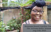 Monsoon Desert Garden Tour-Arizona Rainy Season August 15, 2021
