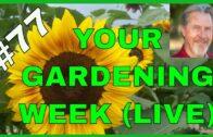 Spring Garden Planning (Q&A)