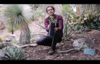 Tuesday with Tony, Quercus toumeyi