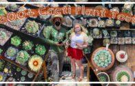 500+ cactus collection tour! Rare and rare cactus + cactus