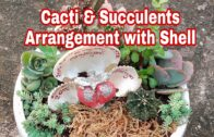 Cactus and succulent arrangement with shells @Mommy Lhyn's garden