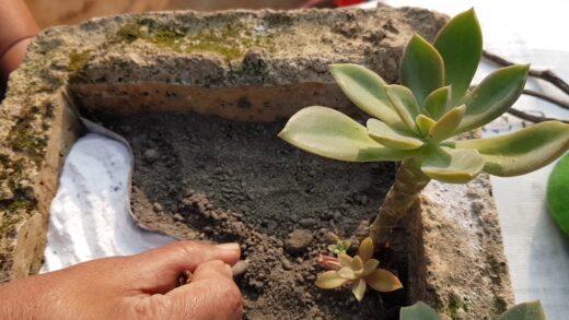 How to create miniature Desert garden using Rangoli and Lantern