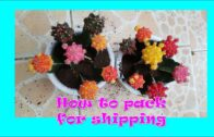 How to pack moon cactus for transportation; cactus and succulent