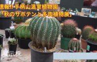 "Kanjiyama Botanical Garden ""Autumn サボン and Succulents Exhibition"" Action Painting"